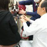 犬の歯磨き 林先生