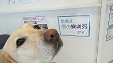 犬の歯みがき